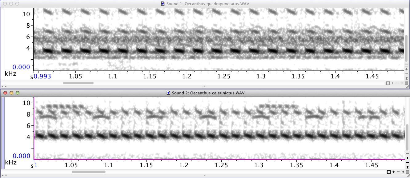 Raven spectrogram compare tree crickets