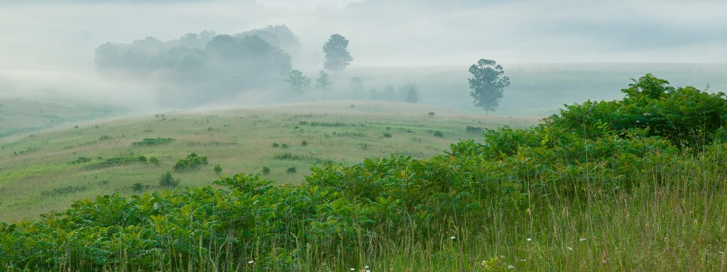 Foggy_morning_WH_C2FS5408