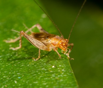 insect_musicians_20130807_Thomas's_Trig_WH__MG_0377