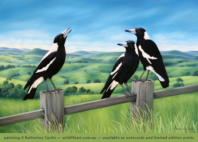 painting of Australian Magpie by Katherine Castle