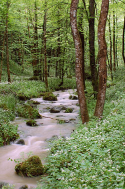 Forest Brook (from iStock Photo)