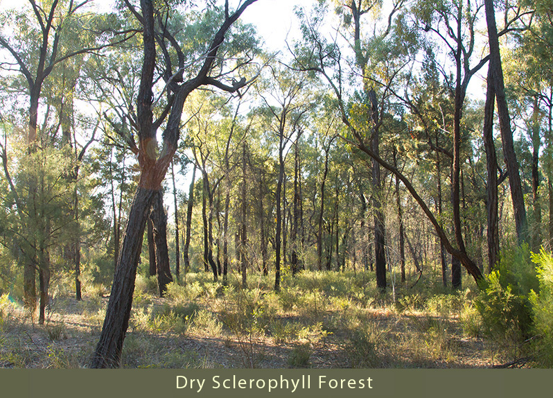photo of dry sclerophyll forest
