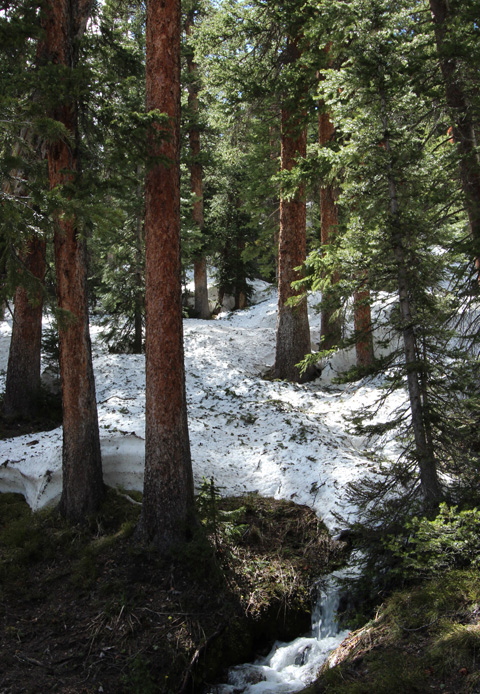 photo of mountain forest with snow