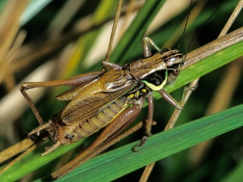 insect_musicians_metrio-rosel_LE_SLIDE_ab