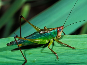 insect_musicians_orchel-pulch_LE_SLIDE