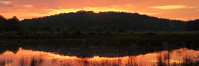 photo of marsh at dusk - by Lang Elliott