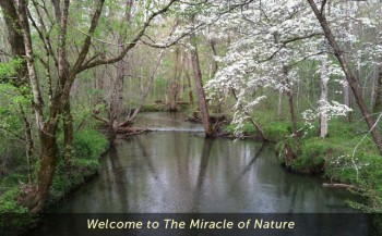 Welcome to the Miracle of Nature