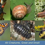 All Creatures, Great and Small