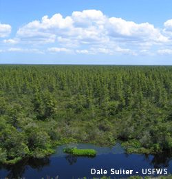 photo of Pocosin Lakes National Wildlife Refuge by Dale Suiter, USFWS
