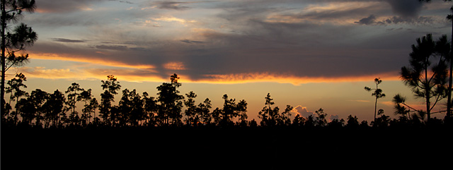 photo of dawn in southern pine woods