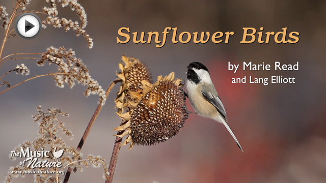 sunflower bird placeholder image