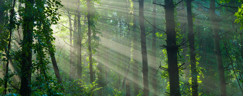 Photo of sunrays in deep forest