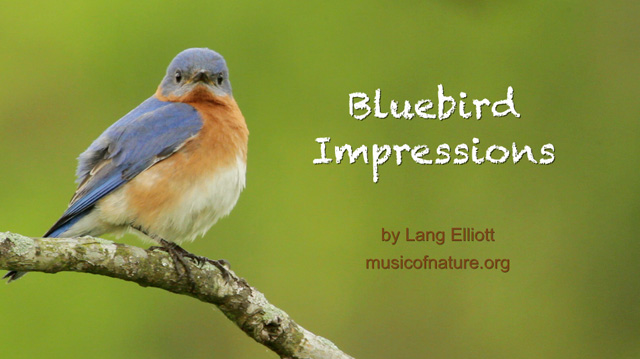 placeholder image for Bluebird Impressions clip