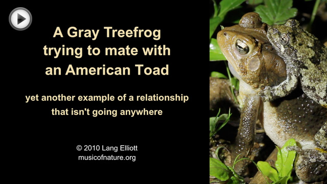 placeholder image for treefrog and toad mating video