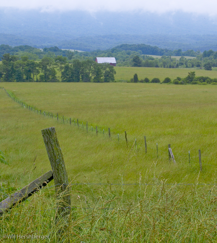 Quiet pasture with barred wire fence and barn in distance.